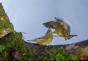 In Flight Fight (Copy).jpg