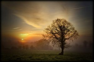 c47-Misty Morning Tree (Copy).jpg